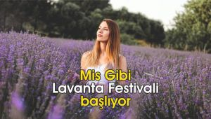 Mis gibi Lavanta Festivali başlıyor