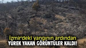 İzmir'deki yangının ardından yürek yakan görüntüler kaldı