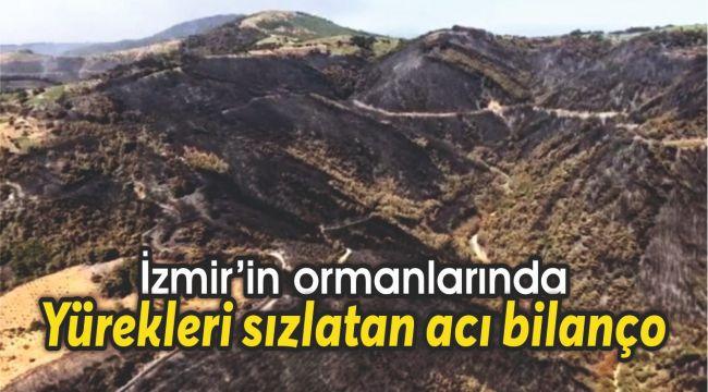 İzmir'in ormanlarında yürekleri sızlatan acı bilanço
