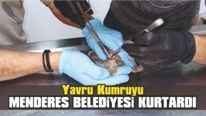 Yavru Kumruyu Menderes Belediyesi Kurtardı