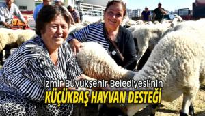 İzmir Büyükşehir Belediyesi'nin küçükbaş hayvan desteği devam ediyor