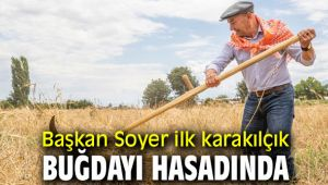 Başkan Soyer ilk karakılçık buğdayı hasadında