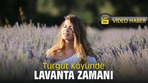 Turgut Köyünde Lavanta Zamanı