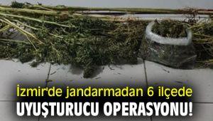 İzmir'de jandarmadan 6 ilçede uyuşturucu operasyonu!