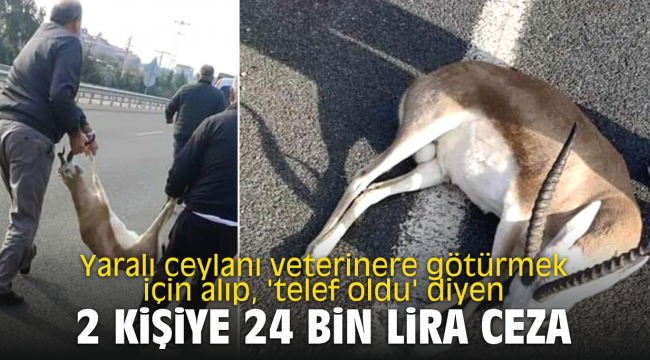 Yaralı ceylanı veterinere götürmek için alıp, 'telef oldu' diyen 2 kişiye 24 bin lira ceza
